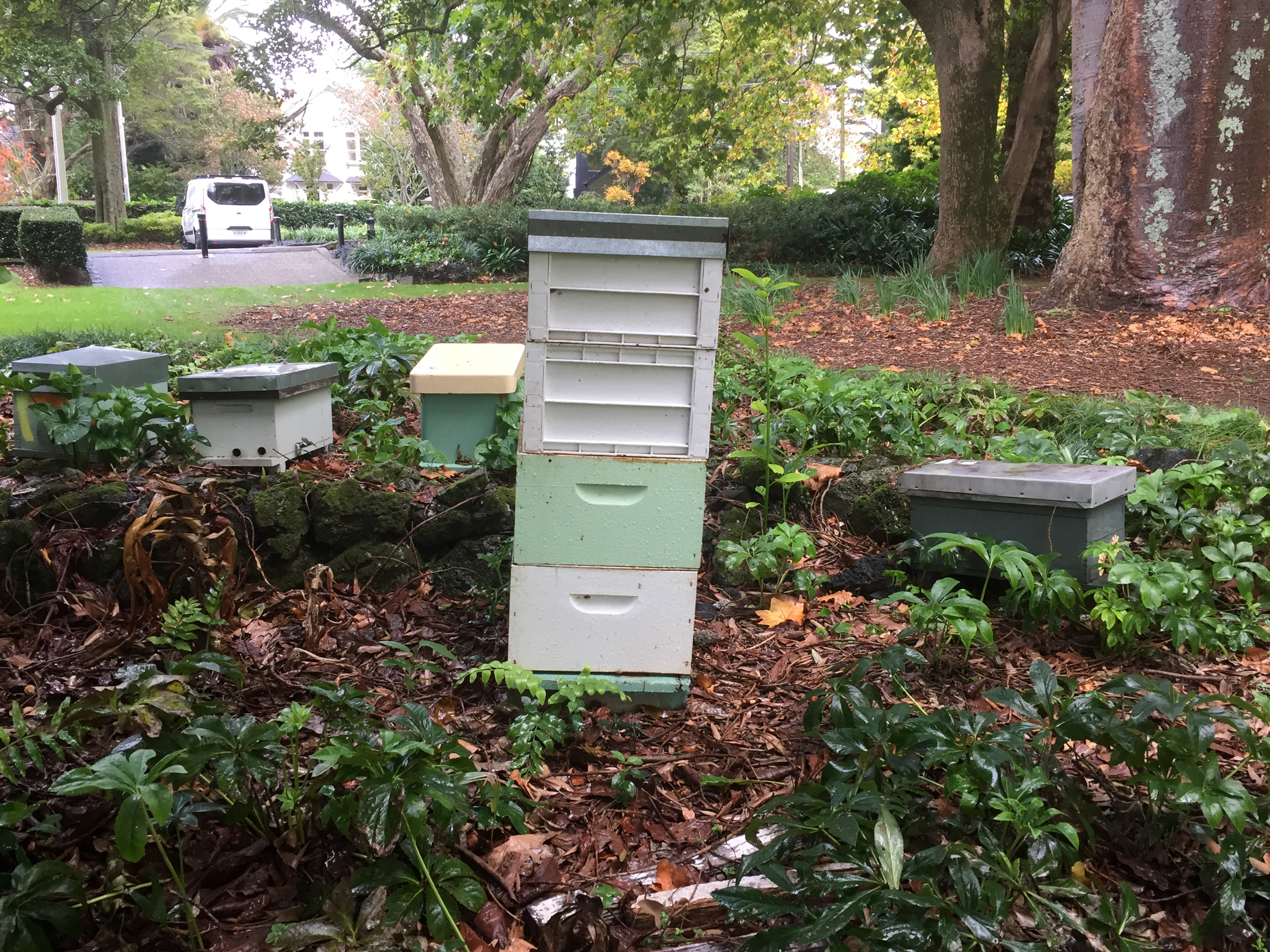 Currently the Pines hosts rented beehives to support pollination of the flowers, fruit and vegetables in its gardens (and all the surrounding ones!)